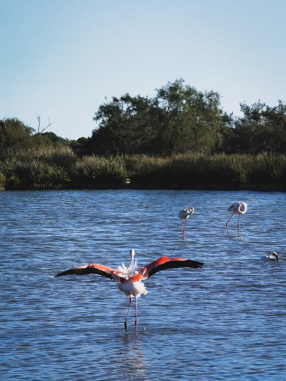 camarga parque ornitologico