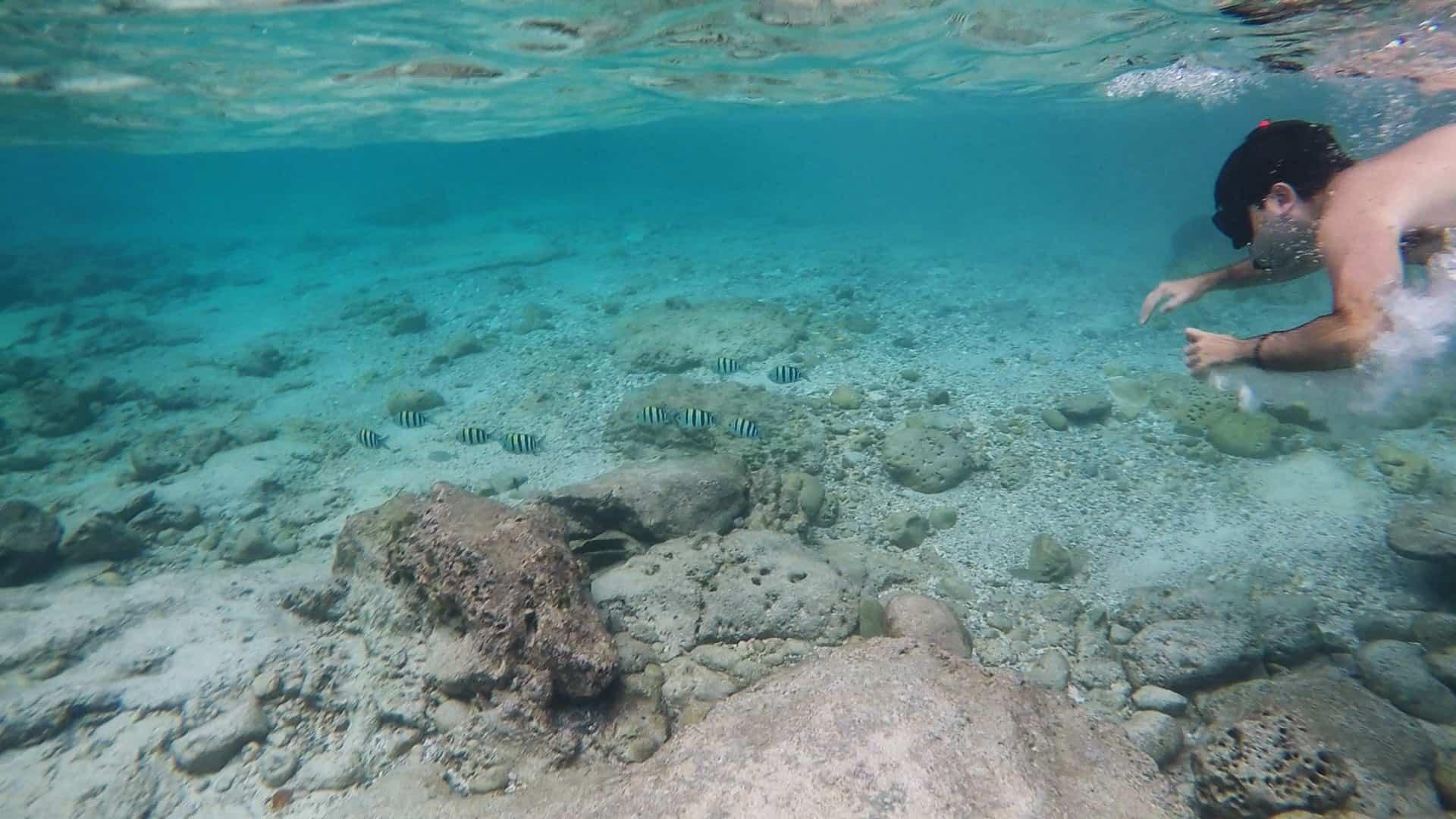 Snorkeling - à procura do Nemo