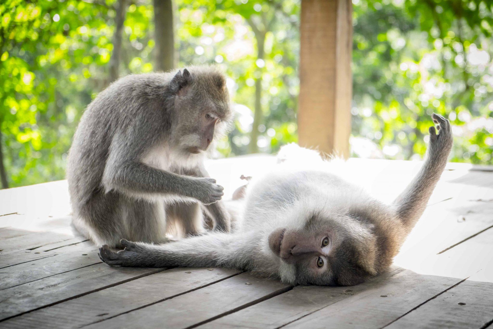 monkey forest ubud roteiro bali