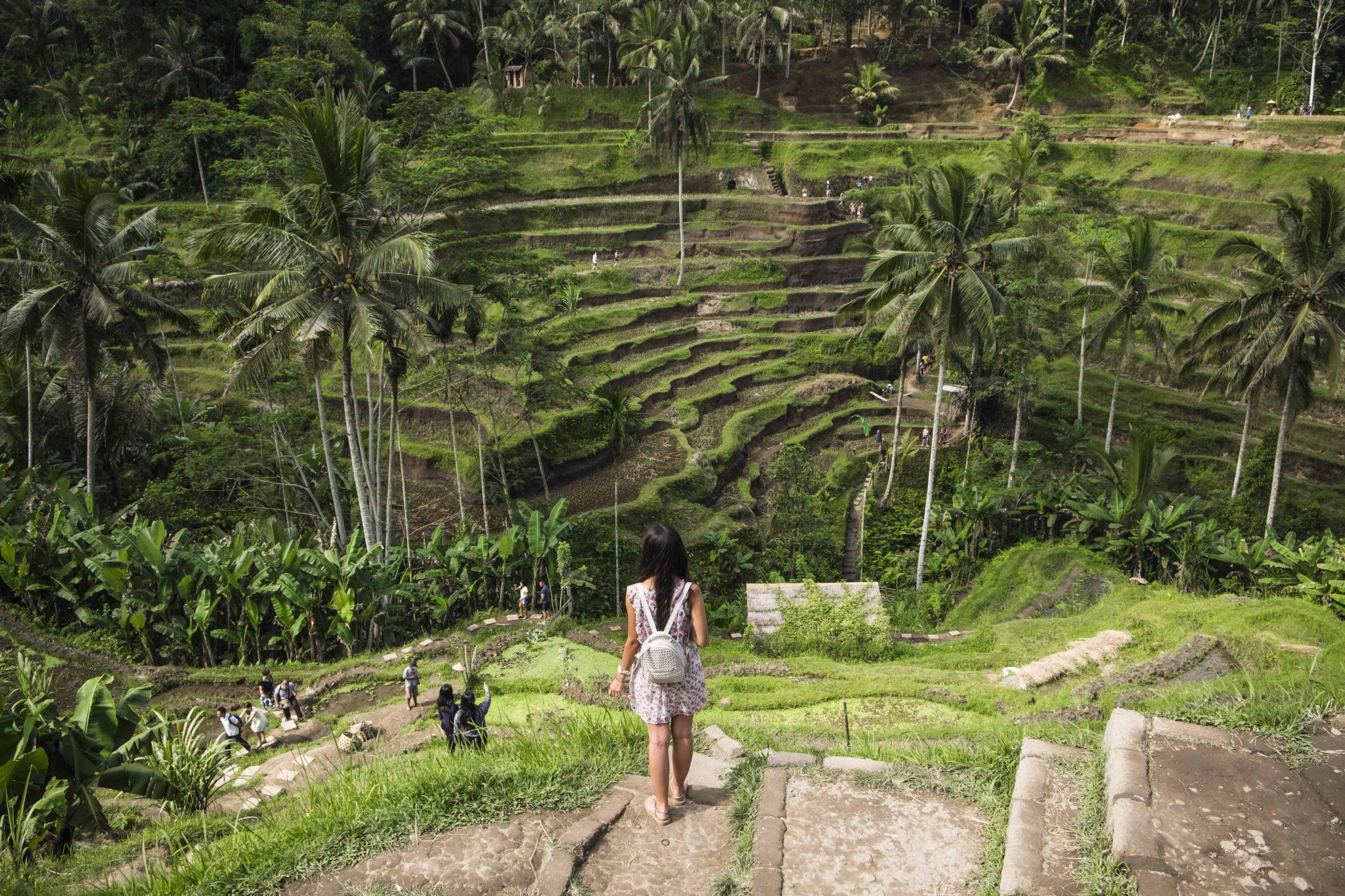 visitar ubud tegallalang