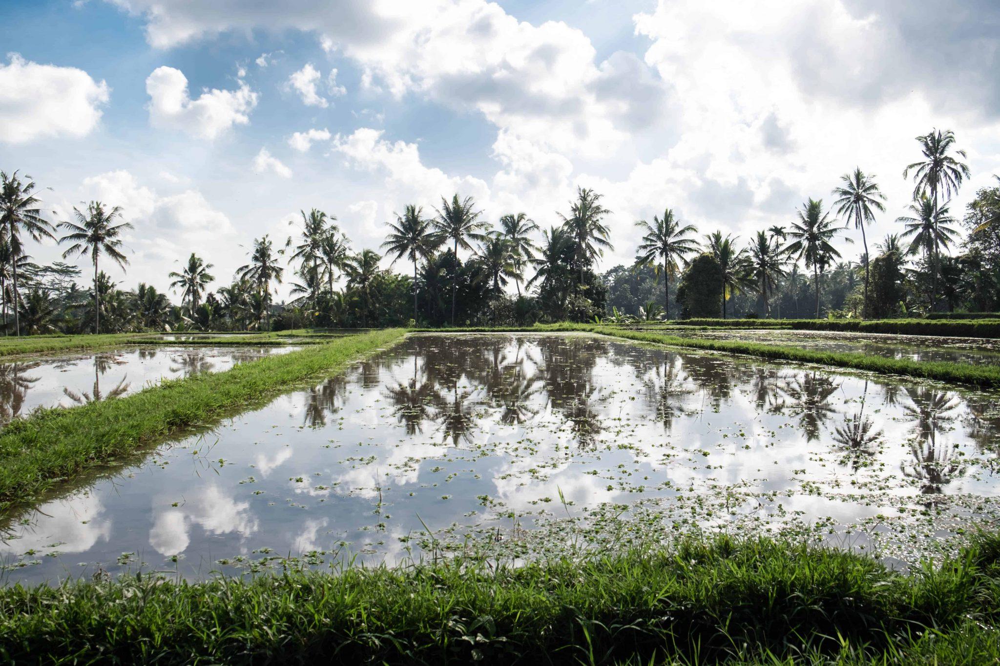 terraços de arroz