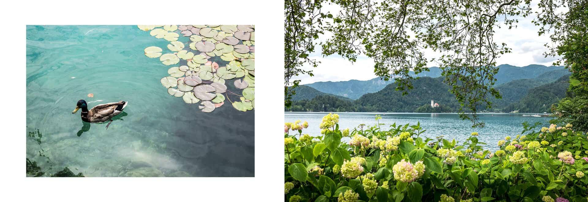 visitar lago bled